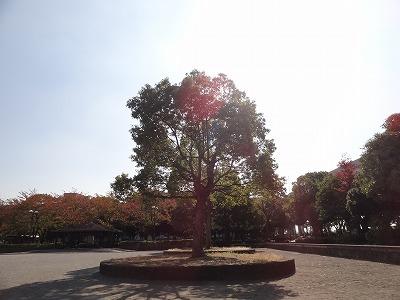 晴れた公園で撮影した木